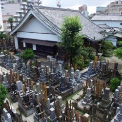 緑に囲まれた寺院